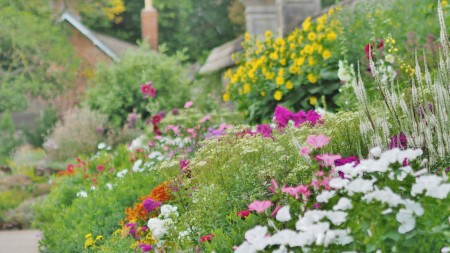 Herbaceous Flower Border at Oxford Botanic Garden