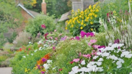 Herbaceous Flower Border at Oxford Botanic Garden