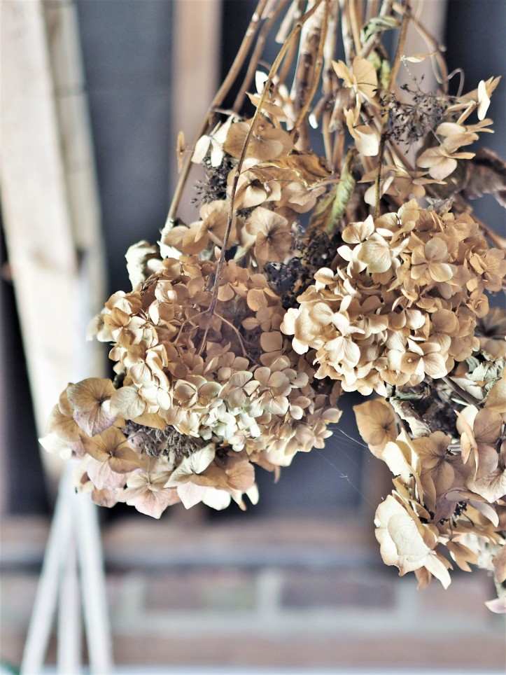 Dried sepia toned hydrangeas suspended from old wood beams
