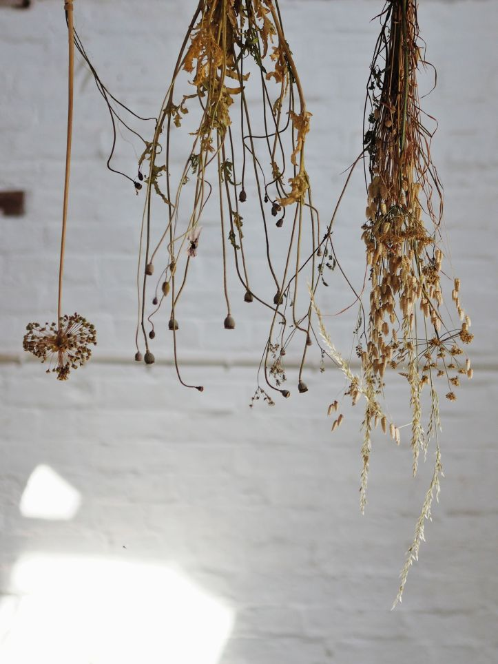 Drying seed heads as the summer sunlight drenches the whitewashed walls