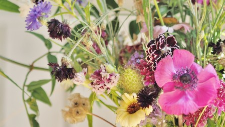Flowers from a British Flower Farm
