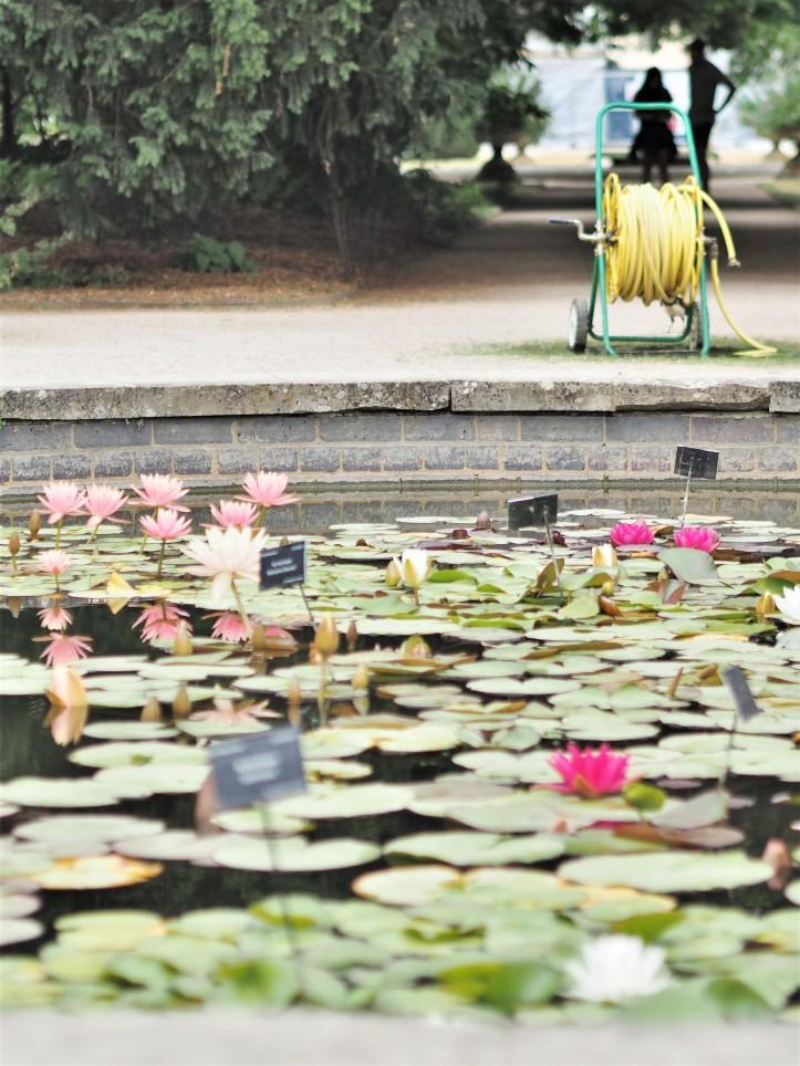 Lily Pond at Oxford Botanic Garden