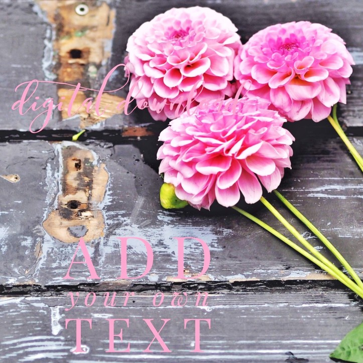 Pink flowers on rustic wooden gate background. Link to stock photos in One Purl Row Etsy store